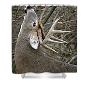 Deer Pictures 444 Shower Curtain
