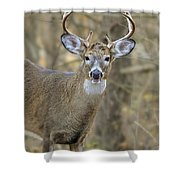 Deer Pictures 445 Shower Curtain