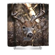 Deer Pictures 449 Shower Curtain
