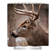Deer Pictures 491 Shower Curtain