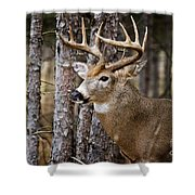 Deer Pictures 508 Shower Curtain