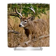 Deer Pictures 525 Shower Curtain