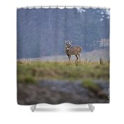 Deer Pictures 527 Shower Curtain