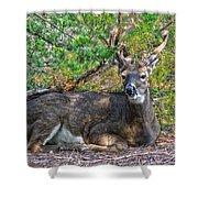 Deer Relaxing Shower Curtain