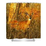 Deer Spotted In A Golden Glowing Field  Shower Curtain
