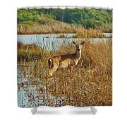 Deer The Point Hatteras Nc 2 12/5 Shower Curtain