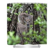 Deer Through The Trees Shower Curtain