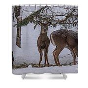 Deer With A Leg Up Shower Curtain