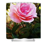 Delicacy Of Life Shower Curtain