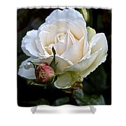 A Rose Of Delicate Beauty Shower Curtain