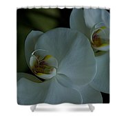 Delicate Bowl Shower Curtain