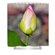 Delicate Bud Shower Curtain