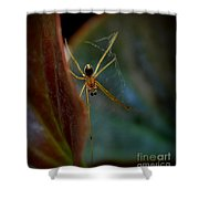 Delicate  Constructor Shower Curtain