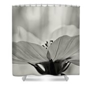 Delicate Cosmos Shower Curtain