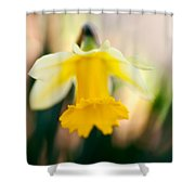 Delicate Daffodil Shower Curtain