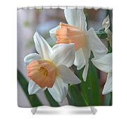 Delicate Daffodils  Shower Curtain