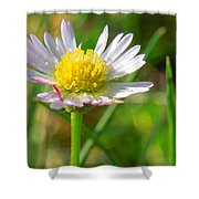 Delicate Daisy In The Wild Shower Curtain