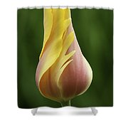 Delicate Folds Of A Tulip Shower Curtain