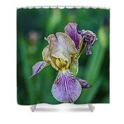 Delicate Iris Shower Curtain