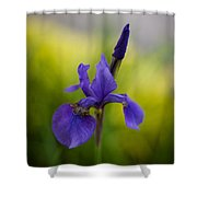 Delicate Japanese Iris Shower Curtain