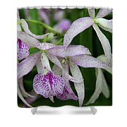 Delicate Orchid Blossoms Shower Curtain