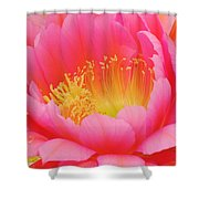 Delicate Pink Cactus Flower Shower Curtain