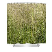 Delicate Tall Grasses Shower Curtain