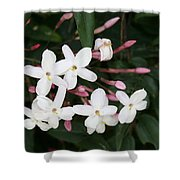 Delicate White Jasmine Blossom With Green Background  Shower Curtain