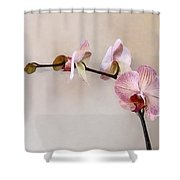 Delicate Pink Phalaenopsis Orchids Shower Curtain
