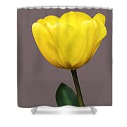Delicate Yellow Shower Curtain