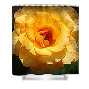 Delicate Yellow Rose Shower Curtain