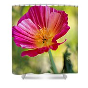 Delightful Shower Curtain by Heidi Smith