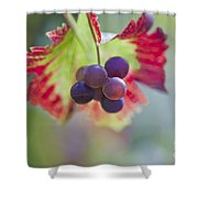 Delightful Moment Shower Curtain