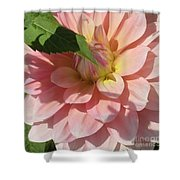 Delightful Smile Dahlia Flower Shower Curtain