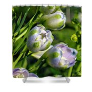 Delphinium Buds Blooming Shower Curtain