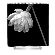 Demure Lotus Shower Curtain
