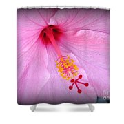 Demure Shower Curtain