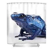 Dendrobates Azureus Shower Curtain