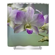 Dendrobium  6398 Shower Curtain