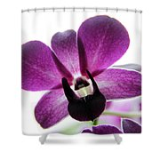 Dendrobium I Shower Curtain