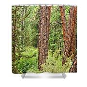 Dense Forest View Shower Curtain