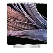 Dental Floss Sem Shower Curtain