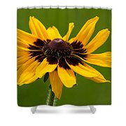 Denver Daisy Shower Curtain