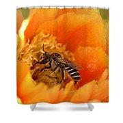 Desert Bee Shower Curtain