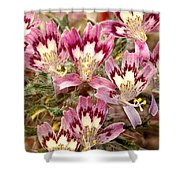 Desert Calico Wildflowers Shower Curtain