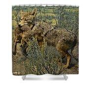 Desert Coyote Shower Curtain