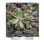 Desert Flora Shower Curtain