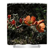 Desert Globemallow Shower Curtain