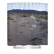 Desert Lily Sancturay Shower Curtain