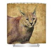 Desert Lynx Shower Curtain